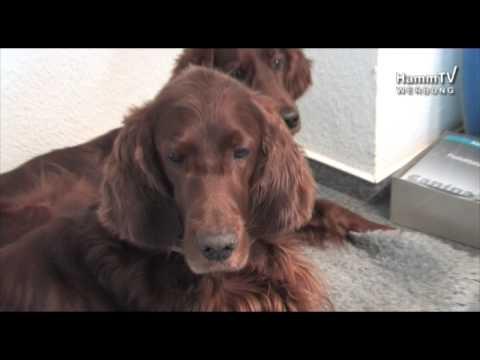 Canina® pharma GmbH - Tierernährung mit Konzept