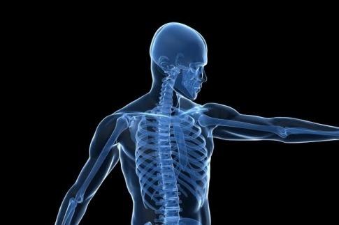 Eine Grafik, die die Knochen eines Menschen zeigt, als Symbol für Osteoporose