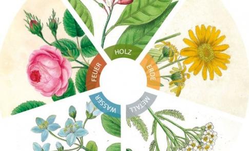 Fünf Elemente der TCM