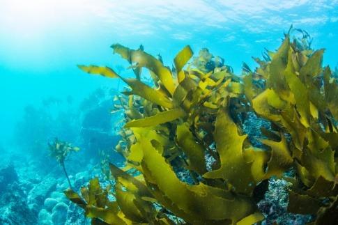 Algen gegen Cellulite unterstützen die Straffung der Haut