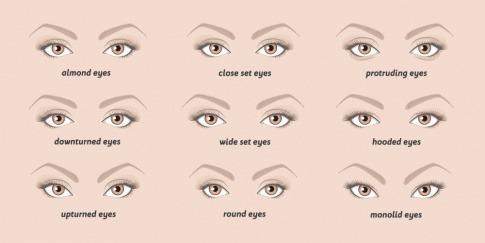Nebeneinander sind verschiedene Augenformen abgebildet