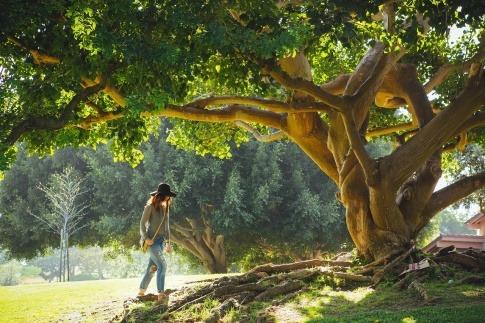 Eine Frau geht zu einem Baum, der energetische Wirkung haben soll
