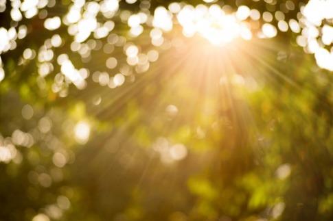 Ein Baumkrone durch die die Sonne scheint