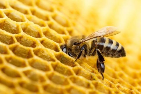 Bienenwachs Entstehung