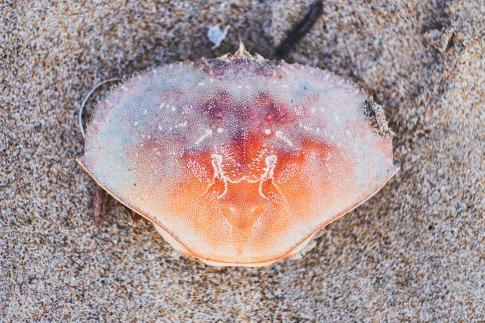 Eine Muschel hat verschiedene Farben