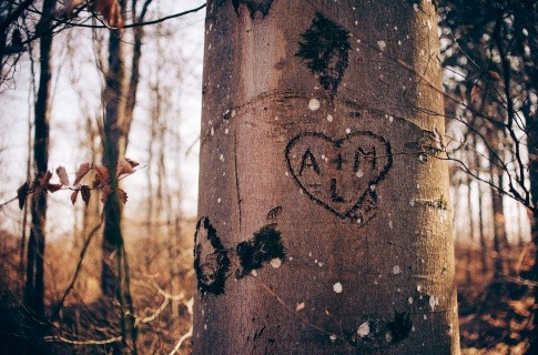 Taten sind zwar ebenfalls wichtig, wenn Liebende die gegenseitige emotionale Bindung stärken wollen. Doch es reicht nicht, einfach ein Herz und zwei Buchstaben in einen Baum zu ritzen, wie in diesem Bild geschehen, um lange glücklich zu bleiben.