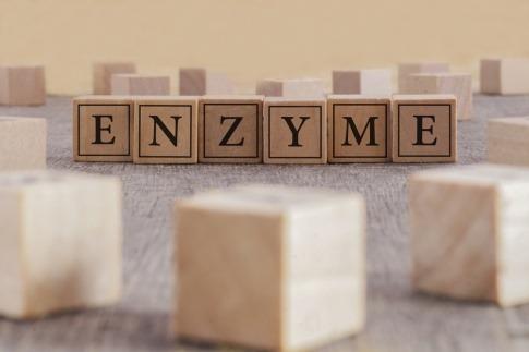 Das Wort Enzyme aus Holzbuchstaben