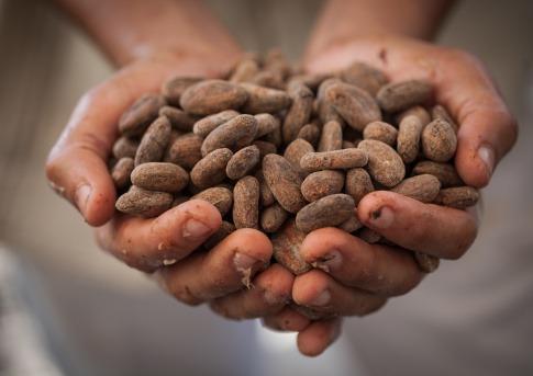 Ein Mensch hält Kakaobohnen in den Händen
