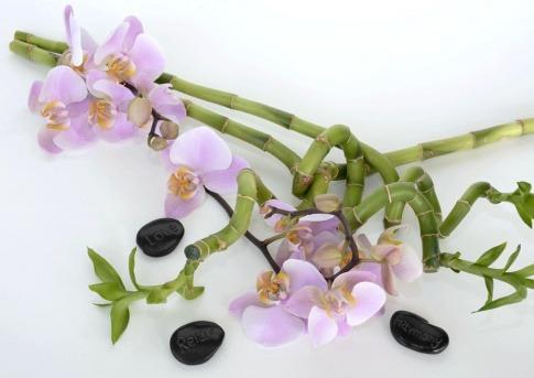 Zwischen schwarzen Steinen mit Aufschrift liegen Orchideen und Bambuszweige