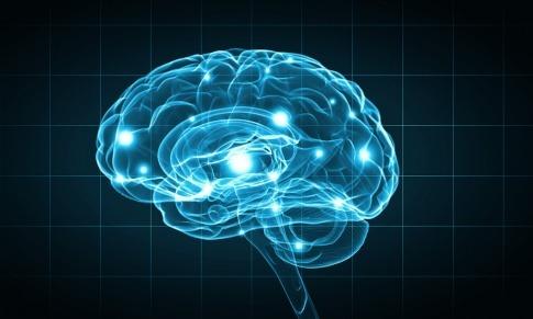 Ein Gehirn ist graphisch dargestellt