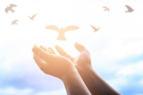 Zwei Hände lassen mehrere Vögel frei fliegen
