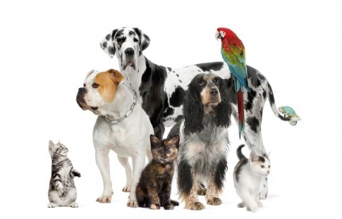 Haustiere stehen zusammen