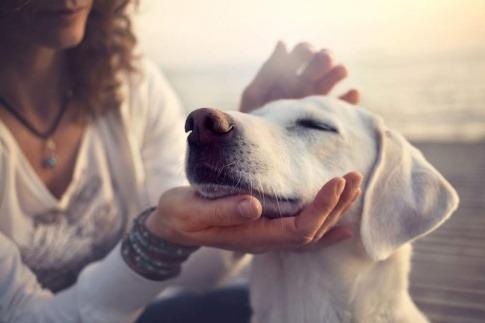 Eine Frau streichelt einen Hund mit hängenden Ohren