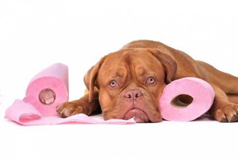 Ein Hund liegt zwischen zwei Klopapierrollen