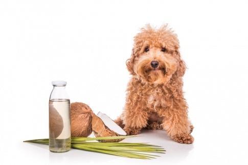 Ein Hund sitzt neben den Zutaten für Kokosöl