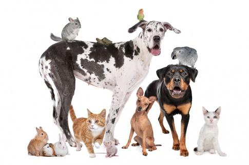 Hunde, Katzen und ein Vogel sind auf einem Bild