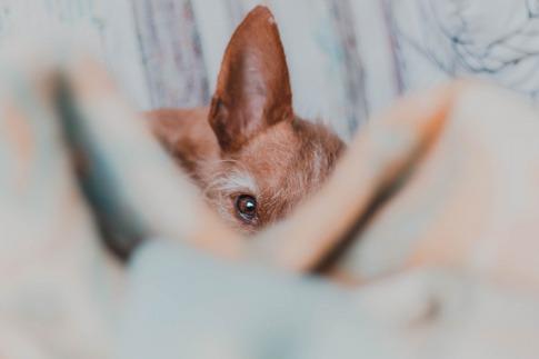 Ein Hund versteckt sich