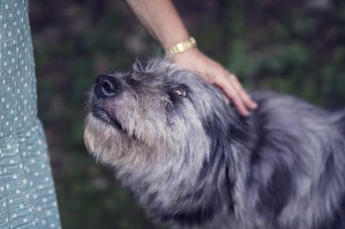 Ein Hund wird gestreichelt