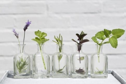 In kleinen Glasfläschchen stecken Pflanzen als Symbol für Hydrolate