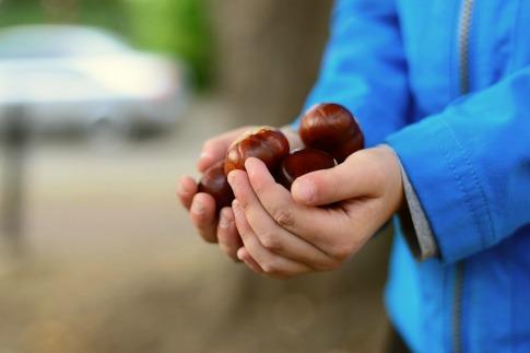 Ein Mensch hält einige Kastanien in seinen Händen