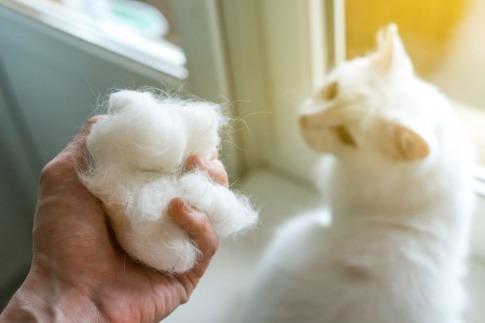 Eine Hand hält Katzenhaare, daneben eine Katze mit Haarausfall