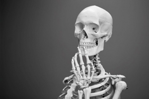 Skelett als Symbol für starke Knochen