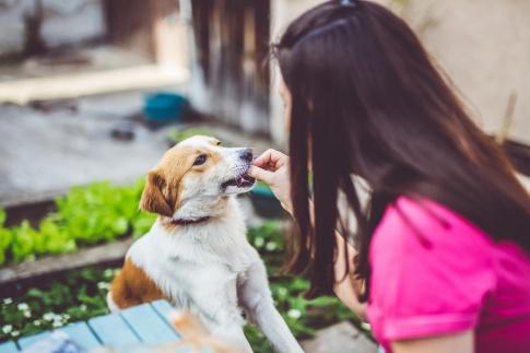 Eine Frau gibt einem Hund ein Leckerli