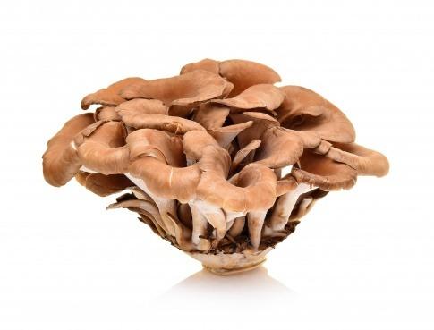Maitake Pilze in Großaufnahme