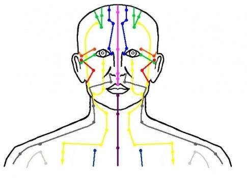 Ein Bild zeigt die Meridiane sowie das Nervensystem