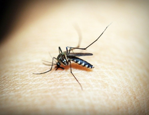 Eine Mosquito sticht einen Menschen
