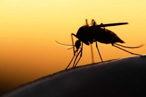 Stechmücken oder Gelsen gehören zu den lästigen Sommerplagen.