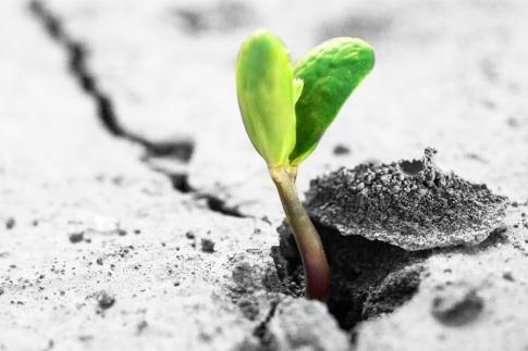 Eine Pflanze kommt aus einem trockenen Boden und wagt einen Neuanfang