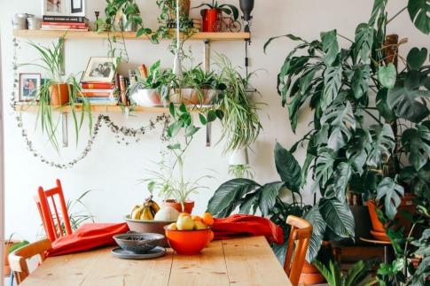 In einem Raum befinden sich viele verschiedene grüne Pflanzen