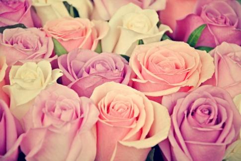 Verschiedene rosarote Rosen
