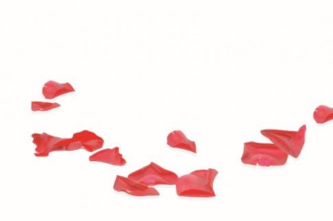 Rosenblüten liegen zerstreut auf einer weißen Fläche