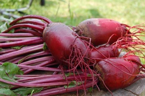 Rote Beete (Rote Rüben) liegen auf einem Tisch