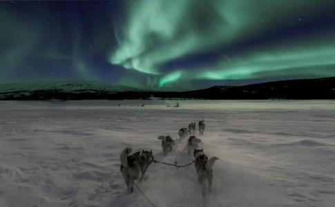 Schlittenhunde ziehen einen Schlitten, im Hintergrund sind Polarlichter