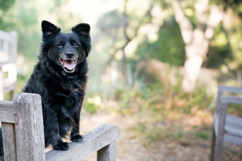 Ein schwarzer Hund sitzt auf einer Bank