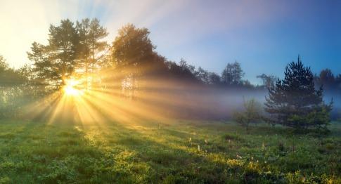 Auf einer Lichtung in einem Waldstück geht die Sonne hinter den Baumkronen auf. Die dadurch gebrochenen Lichtstrahlen fallen auf ein Feld im Vordergrund.