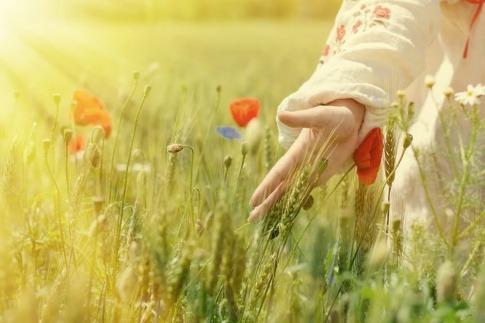 Eine Hand streicht durch ein Blumenfeld.