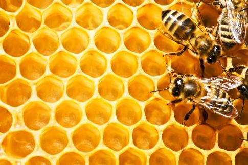Von den Bienen kommen die wertvollen Stoffe für das Gelee Royale