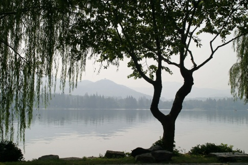 Eine Trauerweide steht vor einem See