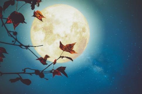 Vor einem Vollmond im Oktober sind Herbstblätter
