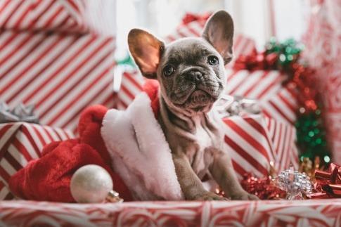 Hund in einer Weihnachtsmütze