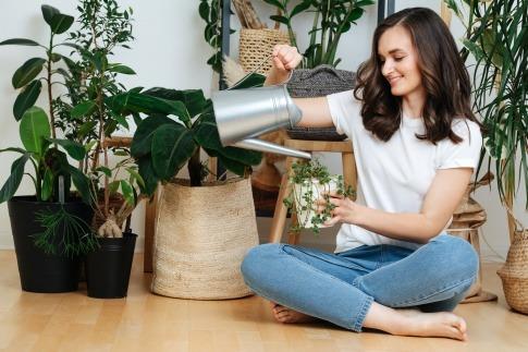 Eine Frau gießt Zimmerpflanzen für ein gesundes Raumklima