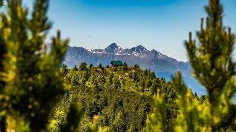 Hütte in einem Wald von Zirben
