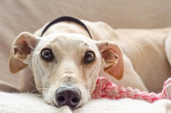 Neben einem Hund liegt ein Seilspielzeug