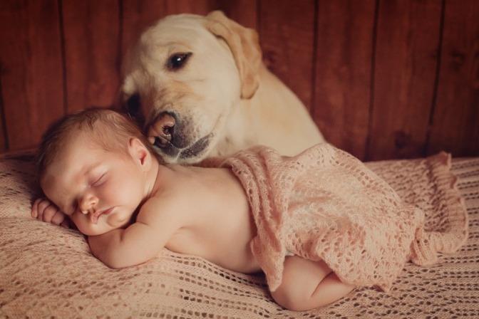 Ein Golden Retriever wacht über ein schlafendes Baby.