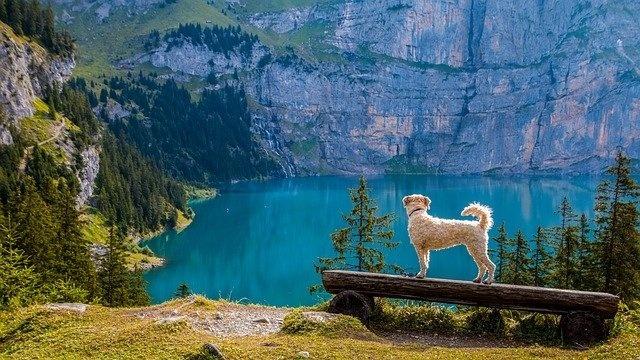 Ein Hund blickt auf einen Bergsee