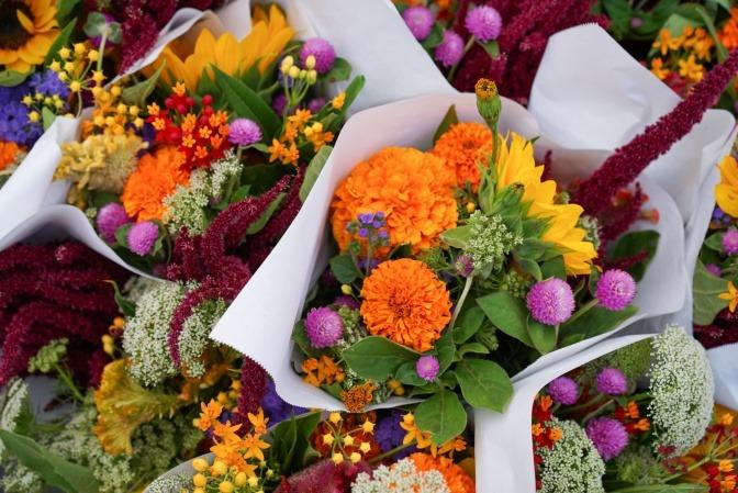 Wer einen Blumenstrauß selber binden möchte, greift dazu bestimmt auf Blumen wie die im Bild gezeigten zurück, die man in vielen Gärten finden kann.
